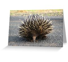 Angry Echidna  Greeting Card
