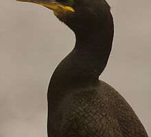 Shag 2 by Jon Lees