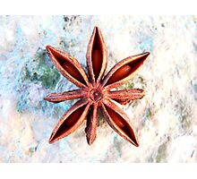 Star for Jo Photographic Print
