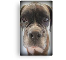 Are There Any Choc Cookies In There? Canvas Print
