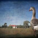 Off to Church said Toulouse the Goose by Clare Colins