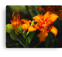 Sun Kissed Lily's Canvas Print