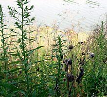 Pa.Nature  by joannadehart
