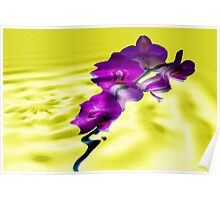 Reflections of Moth Orchid Poster