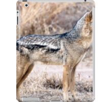 Cute Jackal
