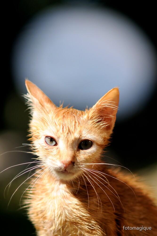 little cat by fotomagique