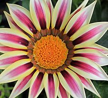 Star Burst by Kathy Rogers-Hartley