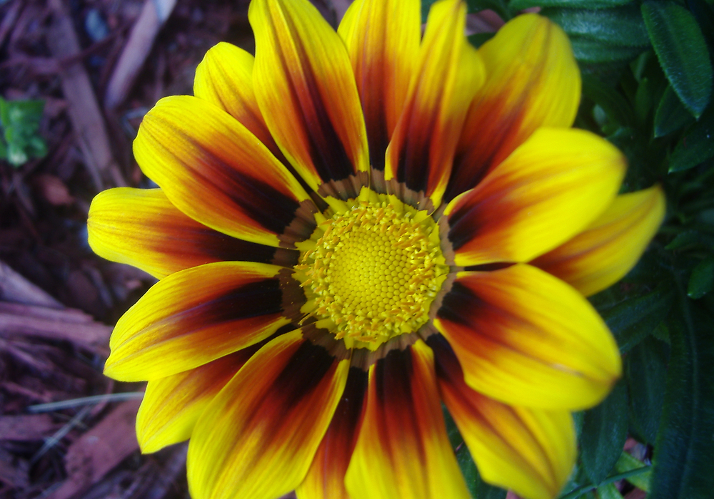 Flower in macro by Sherry Seely