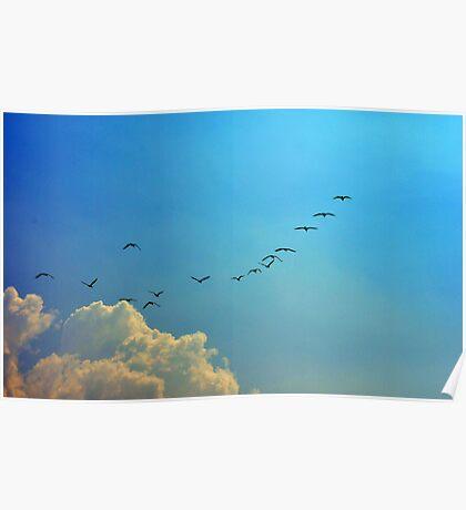 Cormoran Flock Poster