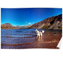 Bailey @ Wastwater Poster