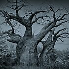 Baobab Tree, Kilimanjaro Safari, Orlando, Florida by jjtaylor