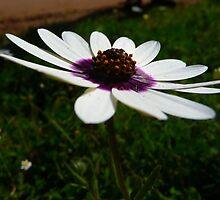West coast blooms 4 by fourthangel