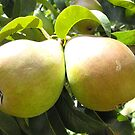 A Pair of Pears by sternbergimages