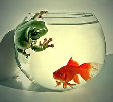 Goldie & Froggie by Steven  Agius