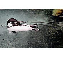 lil penguin ... Photographic Print