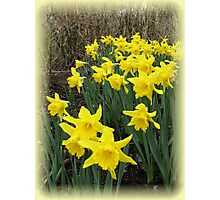 Easter Daffodils Vignette Photographic Print