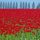 Spring in Skagit Valley by Colleen Farrell