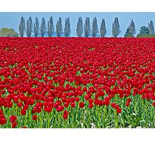 Spring in Skagit Valley Photographic Print