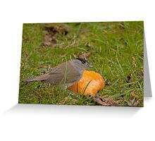 Black cap male feeding on apples Greeting Card