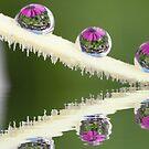 The three droplets by Melinda Gaal
