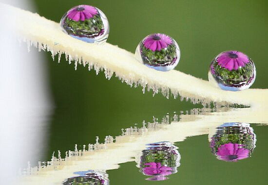 The three droplets by Melinda Gaal