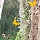 Spanish Moss & Butterflies by Judy Gayle Waller