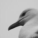 Gulls Head by shane22