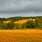 Amber Waves of Grain... by Buckwhite