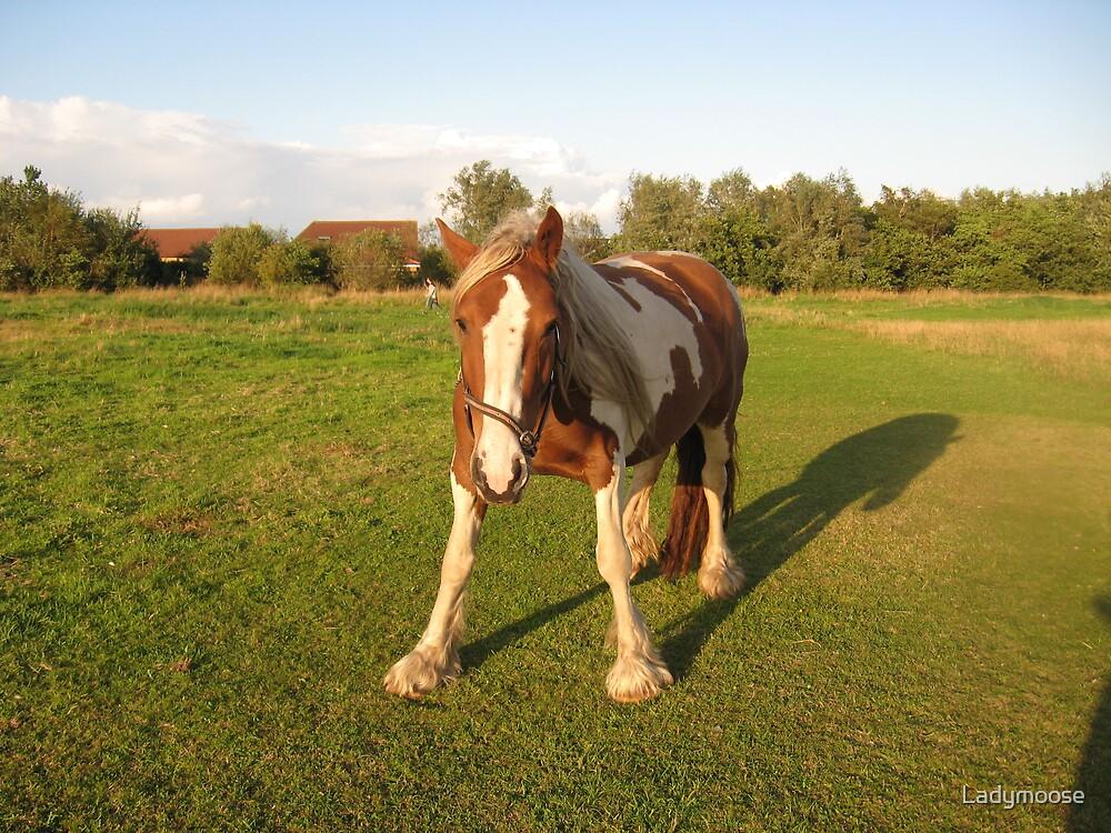 Horse Dance by Ladymoose