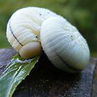 Caterpillar by Dave & Trena Puckett