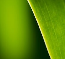 Leaf by Sandra Parlow