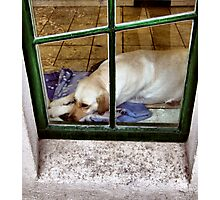 How much is that doggy in the window? Photographic Print