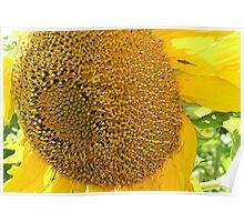 Bug On Sunflower Poster