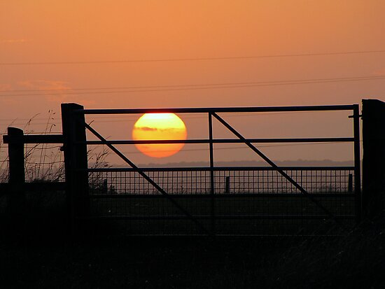 I caught the sun today by Sharon Perrett
