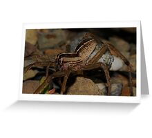 Wolf Spider - Egg sack Greeting Card