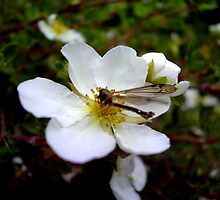 The dragonfly on the flower by zcphotography