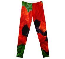 Vibrant Poppy Leggings