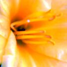 CLOSE UP of yellow lily by Kendra Taber