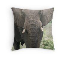 African Elephant Throw Pillow
