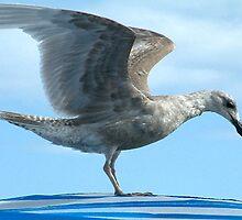 Gull 2 by jakking