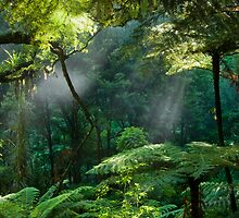 Morning Mist. by Michael Treloar