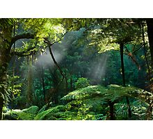 Morning Mist. Photographic Print