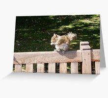 Squirrel in St James Park London Greeting Card