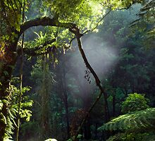Morning Mist by Michael Treloar