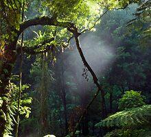 Morning Mist by Michael Treloar