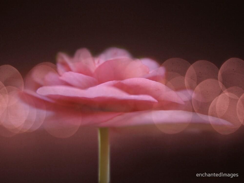 Begonia & Bokeh by enchantedImages