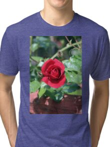 Our 2015 Red Roses Are Now Beginning to Show Tri-blend T-Shirt