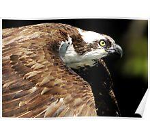 See Hawk Poster