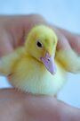 Tiny Duckling by Renee Hubbard Fine Art Photography