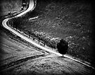 The Curve in the Road by Mary Ann Reilly